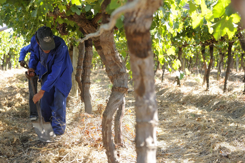 Stellar Winery Organic Farming (5)